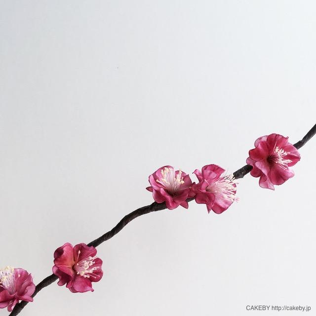 20160226-japanese-plum2
