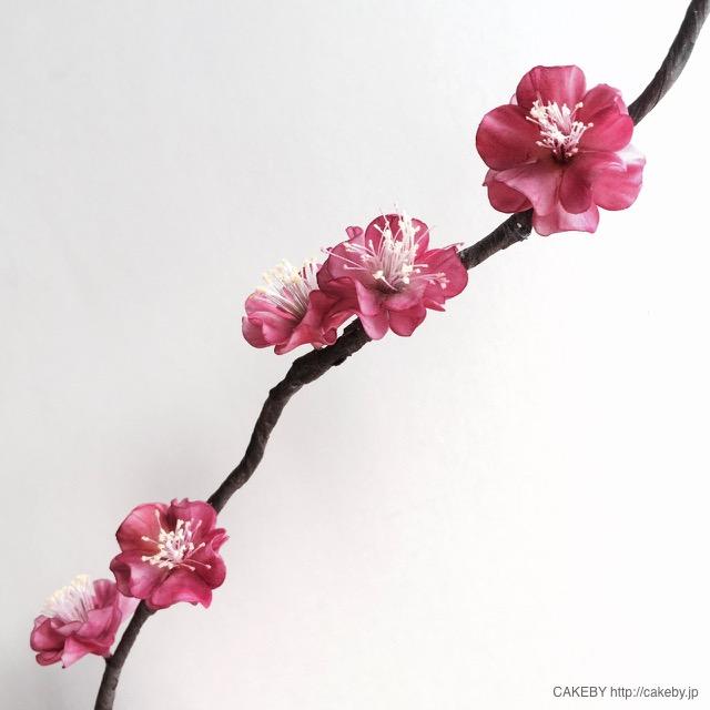 20160226-japanese-plum3